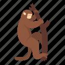 animal, macaque, mammal, monkey, nature, primate, wildlife