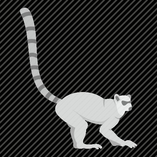 animal, lemur, monkey, primate, striped, tail, wildlife icon