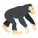 animal, chimpanzee, mammal, monkey, nature, primate, wildlife icon