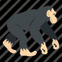 animal, chimpanzee, mammal, monkey, nature, primate, wildlife