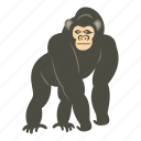animal, bonobo, mammal, monkey, nature, primate, wildlife icon