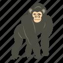animal, bonobo, mammal, monkey, nature, primate, wildlife