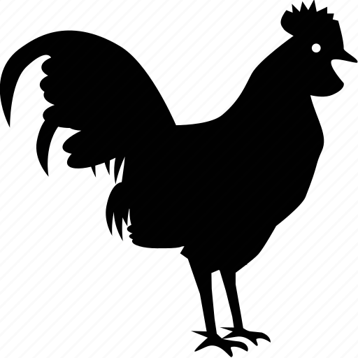 animal, beast, chicken, rooster icon