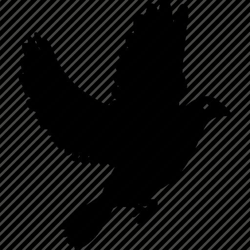 animal, beast, bird, pigeon icon