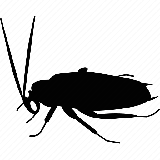 animal, beast, cockroach, fly icon