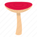 biology, cap, cooking, mushroom russet, autumn, delicious, bolete icon