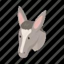 animal, domestic, donkey, farm, head, pet, snout