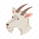 head, goat, animal, farm, pet, domestic, snout
