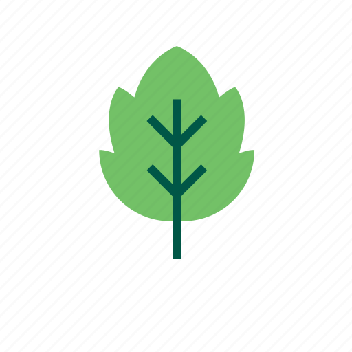leaf, natural, nature, tree icon