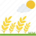 crops season, rural summer landscape, wheat ears, wheat farming, wheat field icon