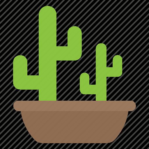 cacti, cactus, desert plant, nature, plant icon