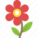 daisy, generic flower, marigold, nature beauty, spring blossom icon