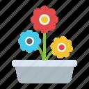 daisy plant, indoor plant, ornamental flowers, pot plant, spring season