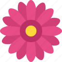 generic flower, marigold, nature beauty, seasonal blossom, spring season icon