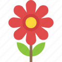 generic flower, magnolia, nature beauty, seasonal blossom icon