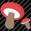fungus, mushroom, organic food, oyster, toadstool