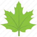 forest, maple leaf, nature, planting, spring fall icon