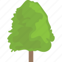 cottonwood, fast growing tree, hedge trees, hybrid trees, poplar tree icon