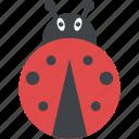 ladybird, insect, beetle, bug, ladybug
