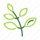 eco, ecology, leaf, nature, organic