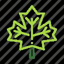 eco, ecology, maple, nature, organic icon