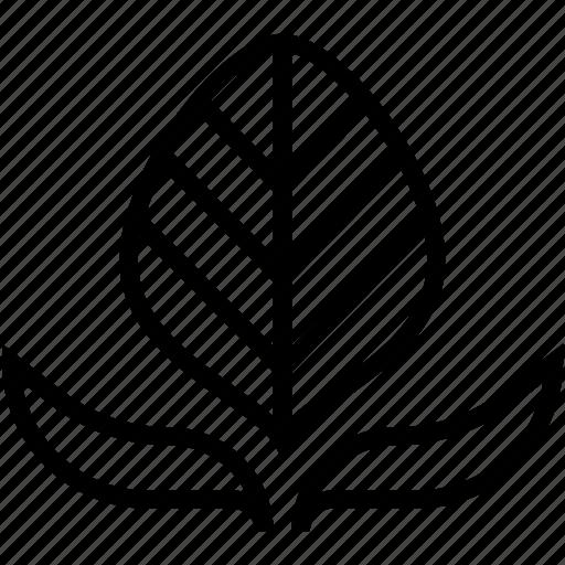leaf, leaflet, leaves, tree branch, twig leaf icon