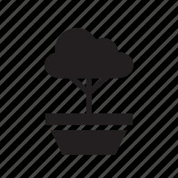 bonsai, flowerpot, nature, plant, pot, small, tree icon