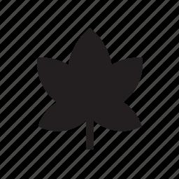 leaf, nature icon