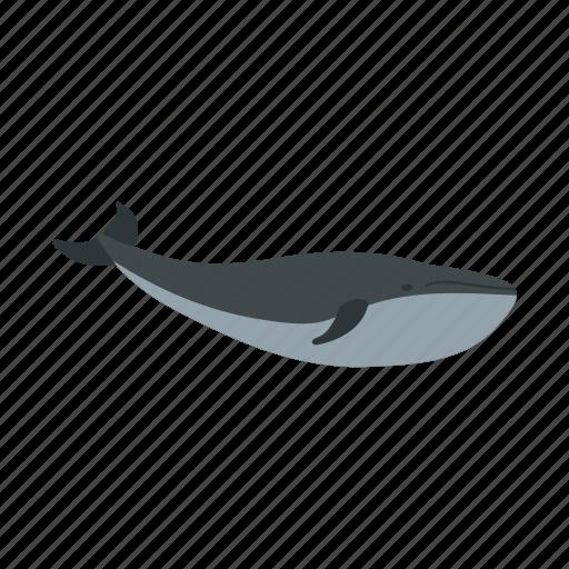 fish, mammal, marine, ocean, sea, whale, wildlife icon