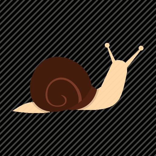 animal, cute, helix, mollusk, shell, slug, snail icon