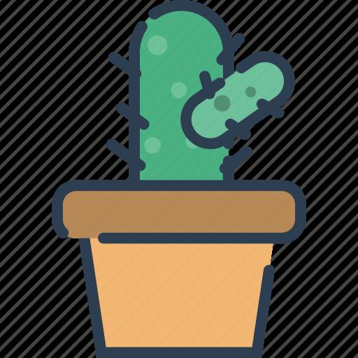 cactus, ecology, nature, plant, pot, tree icon