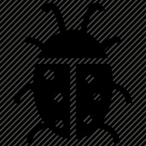 beetle, cockroach, insect, ladybird, moth icon