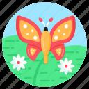 insect, morpho, butterfly, rhopalocera, moth