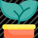 flower, nature, plant, pot