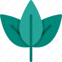 green, leaf, nature, plant, shrub icon