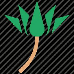 blossom, flower, lilium, lily, lotus, macro flower icon
