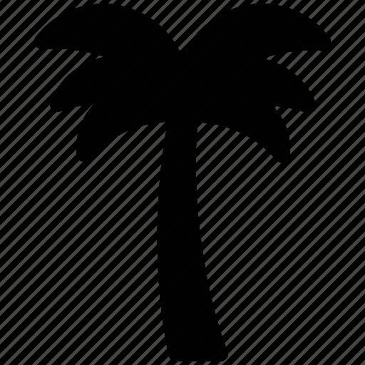 arecaceae, date palm, date tree, palm, palm tree, tree icon