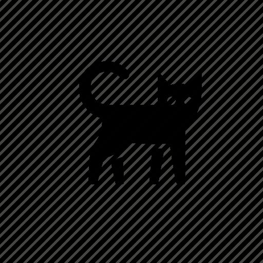 animal, cat, feline, kitty, nature, pet, pussy icon