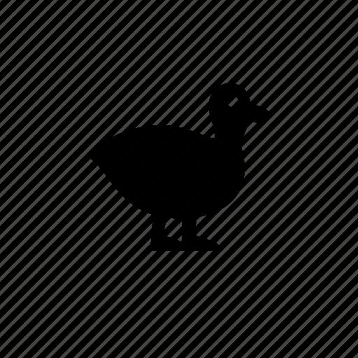 animal, aviary, duck, feathers, mallard, nature icon