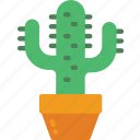 cactus, nature, summer