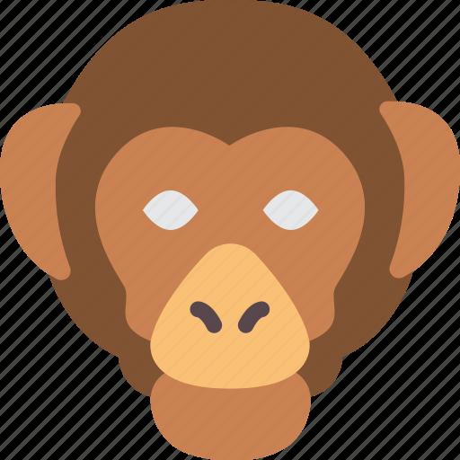 monkey, nature, summer icon