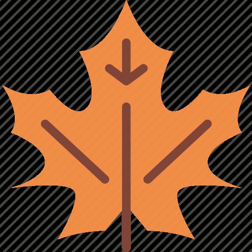 leaf, nature, summer icon