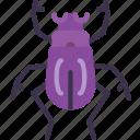 beetle, nature, summer