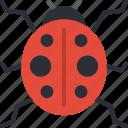 ladybird, nature, summer icon