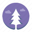 fir, nature, plant, tree icon