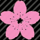 blossom, cherry, festival, flower, pink, sakura
