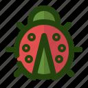 beetle, bug, insect, ladybug, spring