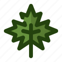 ecology, leaf, maple, nature, plant