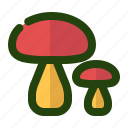 cooking, food, kitchen, mushroom, vegetable