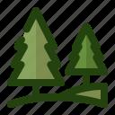 chistmas, nature, pine, plant, tree